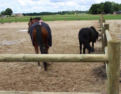 Paardenbak hekwerk